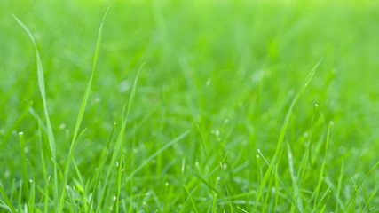 still shot of green grass sways on wind