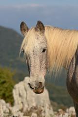 cavallo bianco sguardo
