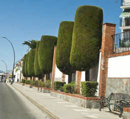 beautiful trees in Ronda, Spain