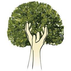 Baum Ökologie Umweltschutz