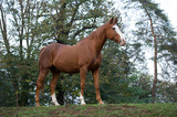 Cavallo al Paddock 4