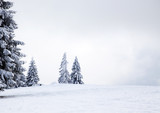 Fototapety Christmas background with snowy fir trees