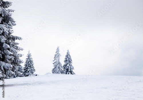 Christmas background with snowy fir trees - 72691200