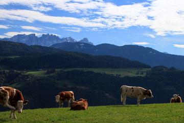 Mucche e Latemar, dal Renon