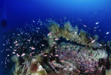 Mediterranean Sea, Sardinia, sunken world war II submarine