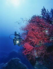 Italy, Tyrrhenian Sea, diver and red gorgonians - FILM SCAN