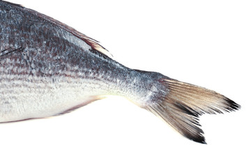 Fresh fish tail isolated on white
