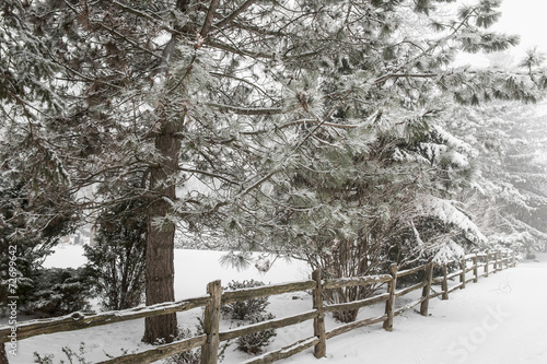 canvas print picture Rural winter scene with fence
