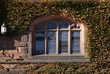 Gothic Window in Princeton University old campus / Ivy cover on East Pyne Hall building window in fall time.
