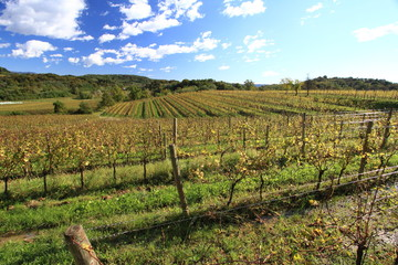 terrazzamenti per vigne