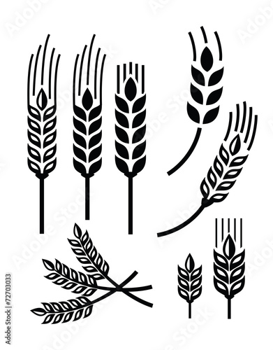 wheat icon - 72703033