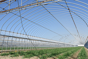 Agricultural building for farming of vegetables