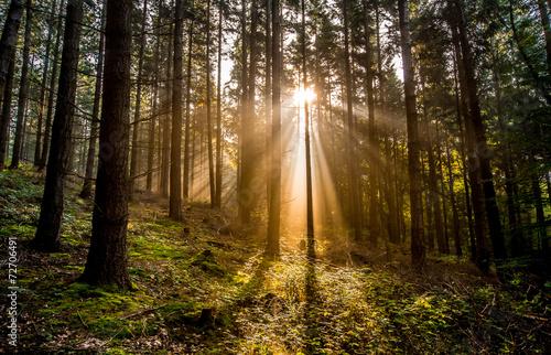 Foto op Plexiglas Bossen Sonnenlicht
