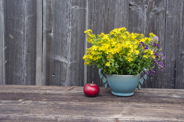 medical fresh st Johns wort flowers and apple
