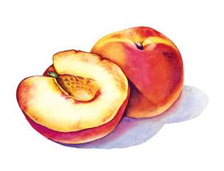 Juicy Peaches fruit watercolor