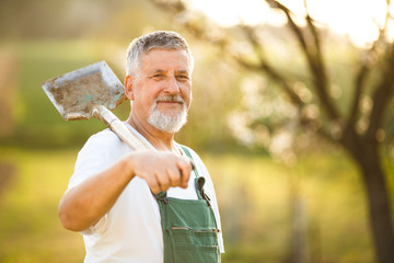 Portrait of a handsome senior man gardening in his garden, on a