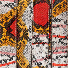 exotic colorful python skin belts as background