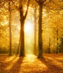 Spätherbst im Wald