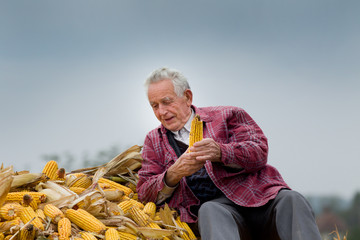 Senior man on corn pile