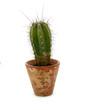 canvas print picture - Kaktus im Blumentopf
