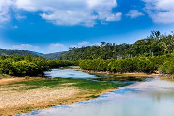 沖縄 慶佐次湾のヒルギ林