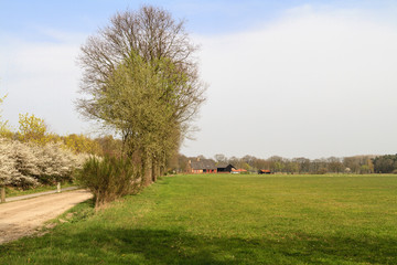Typical Dutch countryside