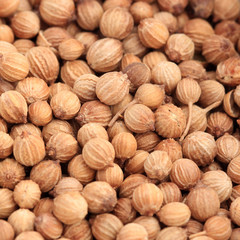 Extreme close-up of coriander seeds