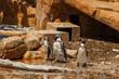 Pinguin – Zoo - Wasser
