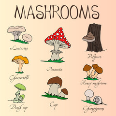 Collection of cartoon mushrooms. Hand drawing.