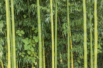 Bamboo Growing