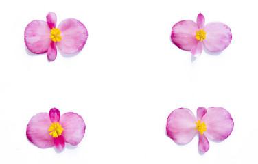 folio blanco con flores en los bordes