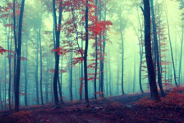 Fantasy vintage autumn forest © robsonphoto