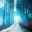 Mystical blurry forest road