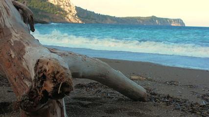 drift wood on deserted beach in Majorca