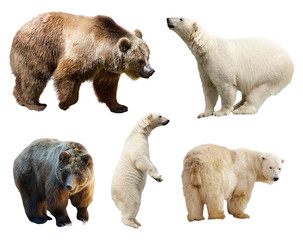 Set of bears. Isolated on white