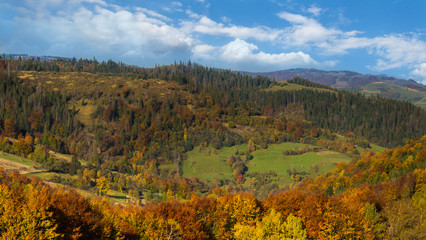 Autumn forest in the Carpathians mountains.