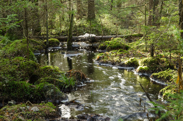 Streaming creek in a mossy forest
