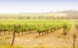 Rows of grapevines taken at Australia's McLaren Vale - 72744686