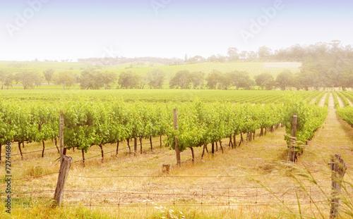 Poster Oceanië Rows of grapevines taken at Australia's McLaren Vale