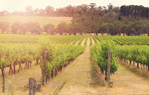 Leinwanddruck Bild Rows of grapevines taken at Australia's McLaren Vale