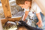 young boy taking care of domestic animals on a farm