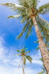 palm trees on sky background, summer vacations