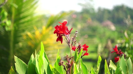 Beautiful, exotic red flower