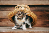 Curiosity kitten under the hat - 72749617