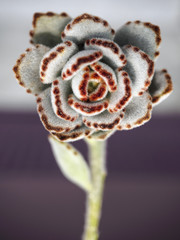 Succulent plant with flower and stem