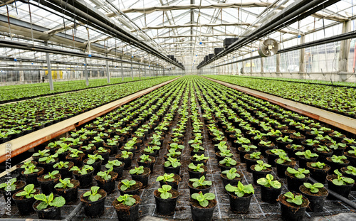 Papiers peints Fleur Interior of a commercial greenhouse