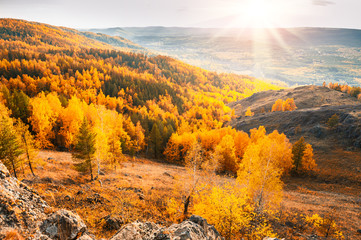 Beautiful view of autumn forest in the mountains
