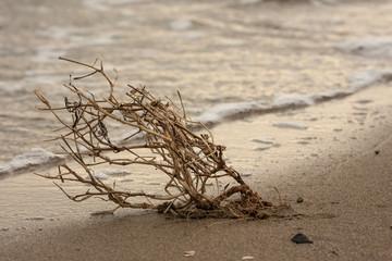 Ramoscello sulla riva del mare bagnato dalle onde