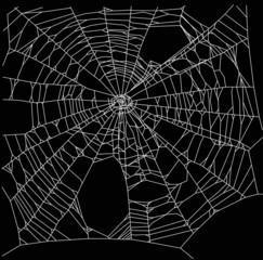 square old white spider web illustration