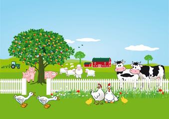 Tiere auf Farm